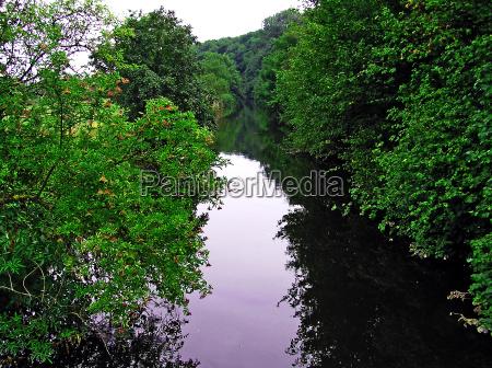 arbol arboles reflexion arbustos bayas idilio