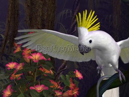 pajaro aves caucasico ala australia selva