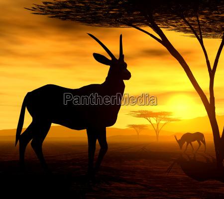 african spirit iv