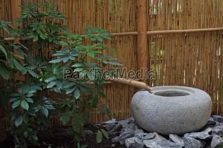 verde asiatico bambu simple meditacion japones
