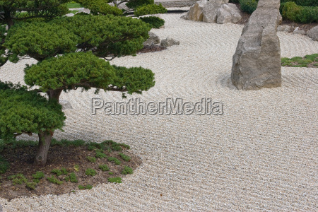 verde asia pino rocas rock grava