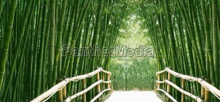strasse spazierweg bambuswald suedkorea pandabaer bamboo