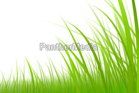 hierba grafico ilustracion prado