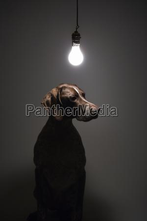 disenyo animal mascotas mamifero retrato animal