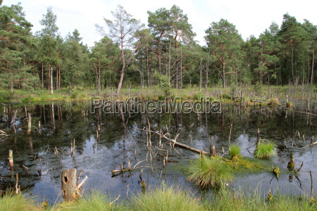 pantano conservacion de la naturaleza reserva