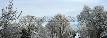 ciudad arbol arboles invierno frio ver