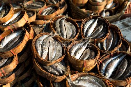 comida salud animal madera piel canasta
