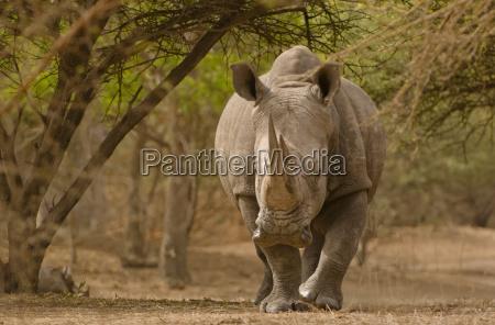 movimiento en movimiento animal mamifero africa