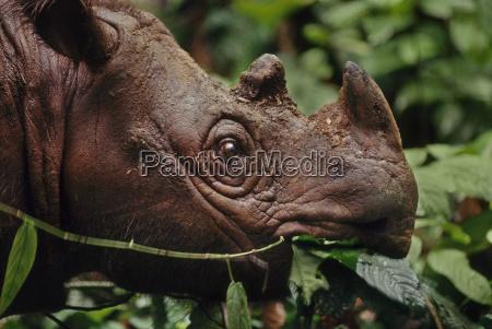 animal mamifero asia horizontalmente al aire