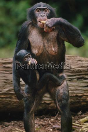 animal mamifero africa al aire libre